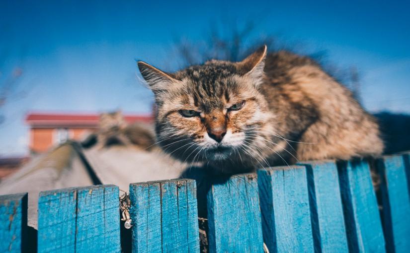 Зачем народу коты. Народные приметы на 3 августа