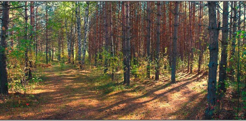 Пошли в лесу грибы. Народные приметы на 8 сентября