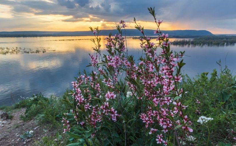 Поздняя весна дарит сухое красное лето. Народные приметы на 9 мая