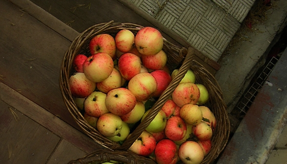 Яблочный Спас. Народные приметы на 19 августа