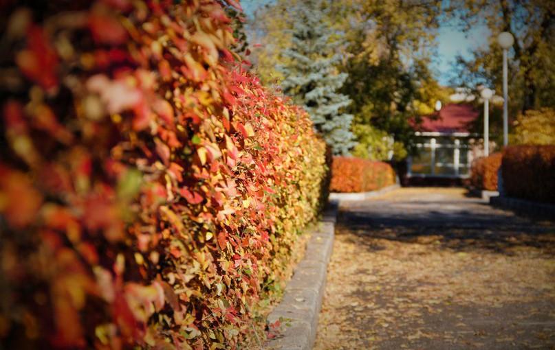 Ласточка осень зазывает. Народные приметы на 13 августа