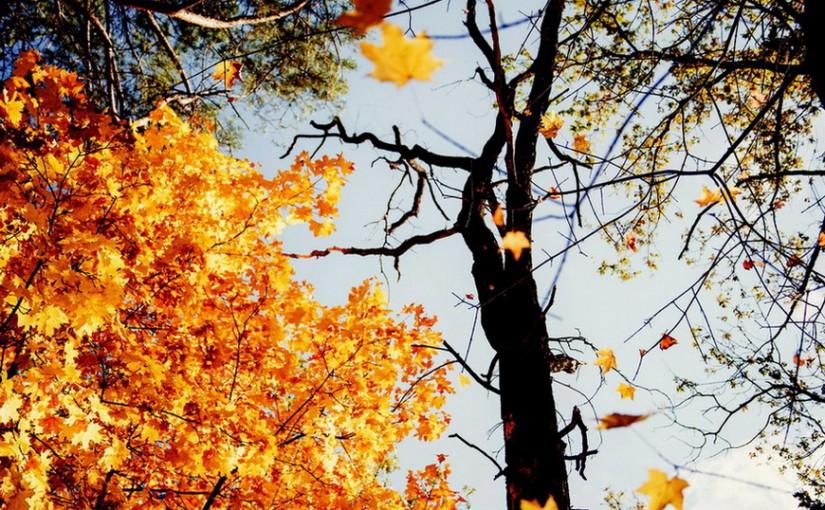 «В Федору лето кончается, осень начинается». Народные приметы на 24 сентября