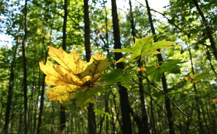 С этого дня прекращается рост растений. Народные приметы на 26 сентября