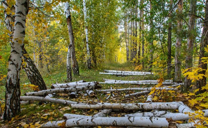 Пора подумать о дровах. Народные приметы на 22 октября
