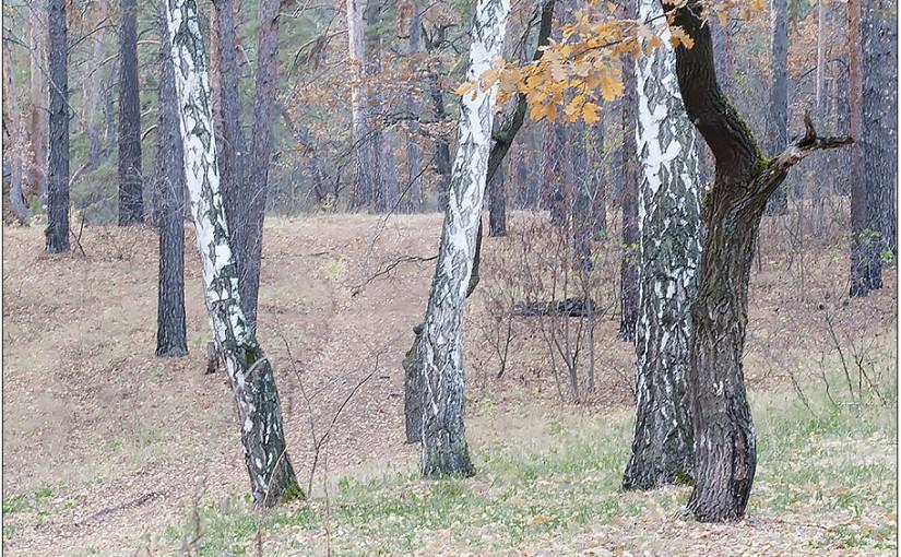 Покров. День перехода от осени к зиме. Народные приметы на 14 октября