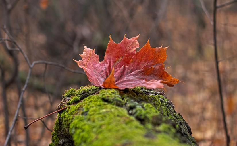 Заботились о дровах, ели мед. Народные приметы на 5 ноября