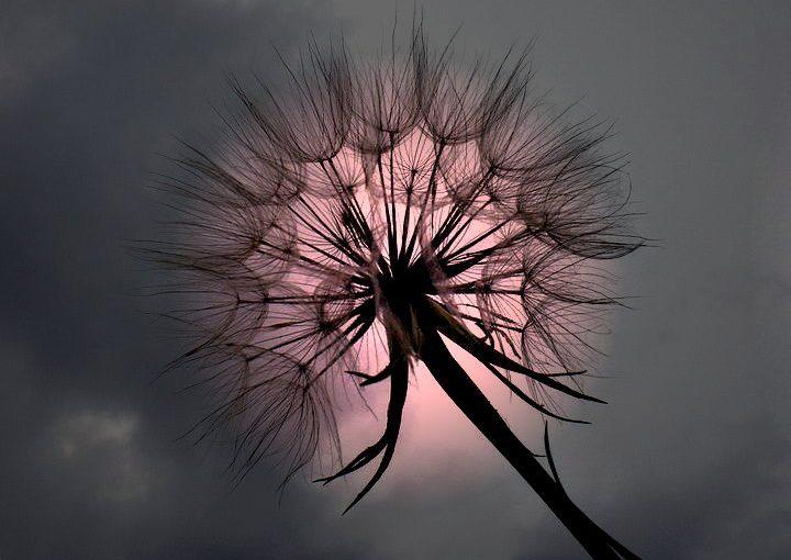 Медитация на весну. Народные приметы на 5 апреля
