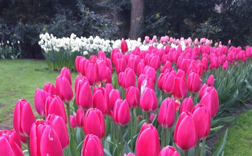 Весна не спешит к нам, но тем радостнее будет эта встреча