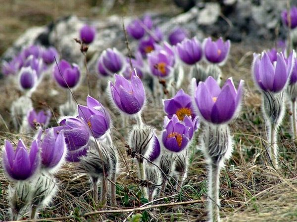 Первые цветы. Народные приметы на 16 апреля