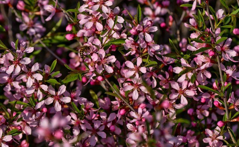 Как цветет терн. Народные приметы на 21 мая
